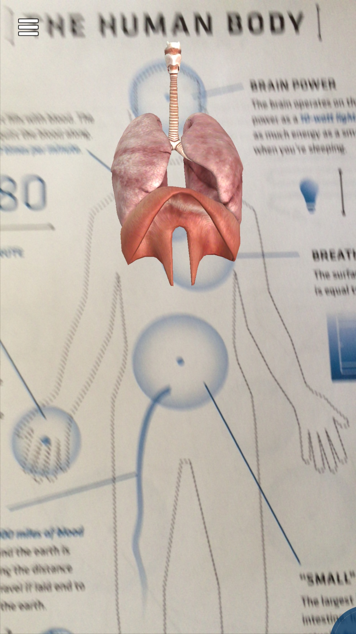 EdTech Summer – Anatomy 4D | AliciaRay.com